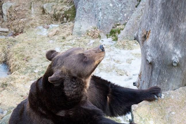 Regionförvaltningsverket övervakar Etseri djurpark.