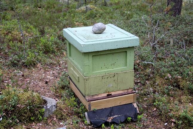 Utrotningshotade bin ska få en möjlighet att flytta på sig via en ny rutt längs med olika områden i huvudstaden.