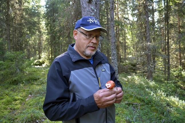 Kurt Söderberg hade många järn i elden och var bland annat en hängiven svampfantast. Han har hållit svampkurser för många österbottningar.