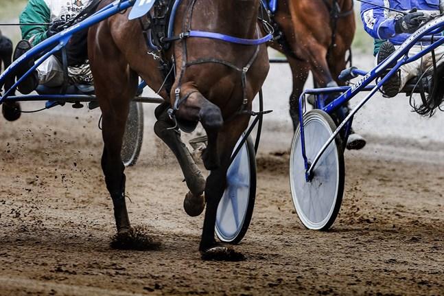 Travhästen togs till en veterinärklinik i Seinäjoki.