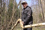 Maj. Det finns bävrar i Kristinestad. Skogsvårdsinstruktör Anders Kaivo-Oja visade hur det kan se ut där de varit i farten.