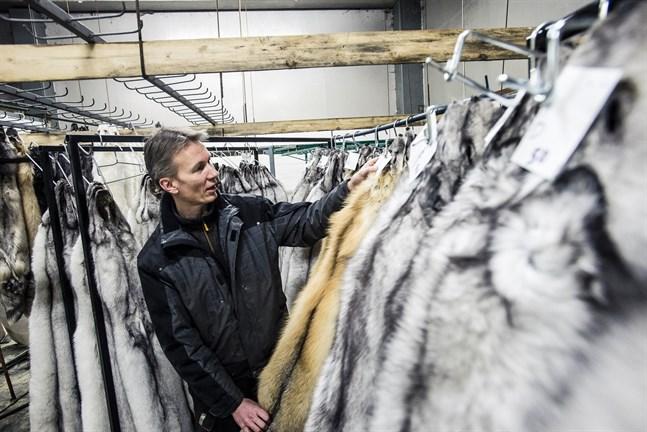 Just nu är farmarnas lager fyllda med skinn. Alla inväntar de kommande auktionerna, konstaterar Kenneth Ingman.