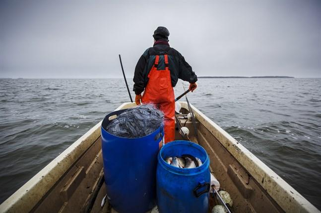 Fiskenäringen har faktabaserad status som miljönyttig verksamhet – yrkesfisket tar faktiskt upp näringsämnen som avrinningsområdena tillför havet, skriver Kari Ranta-aho.