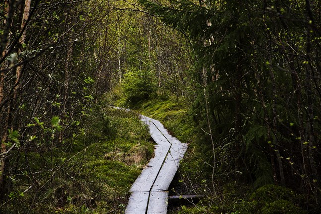 Jubileumsprojekt vill få finländarna ut i naturen med start på Naturens dag i februari.