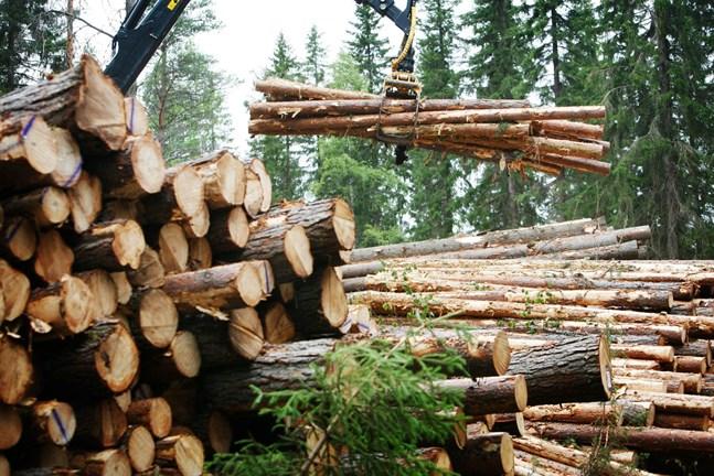 Hur blir det med EU:s syn på skogsbruk?