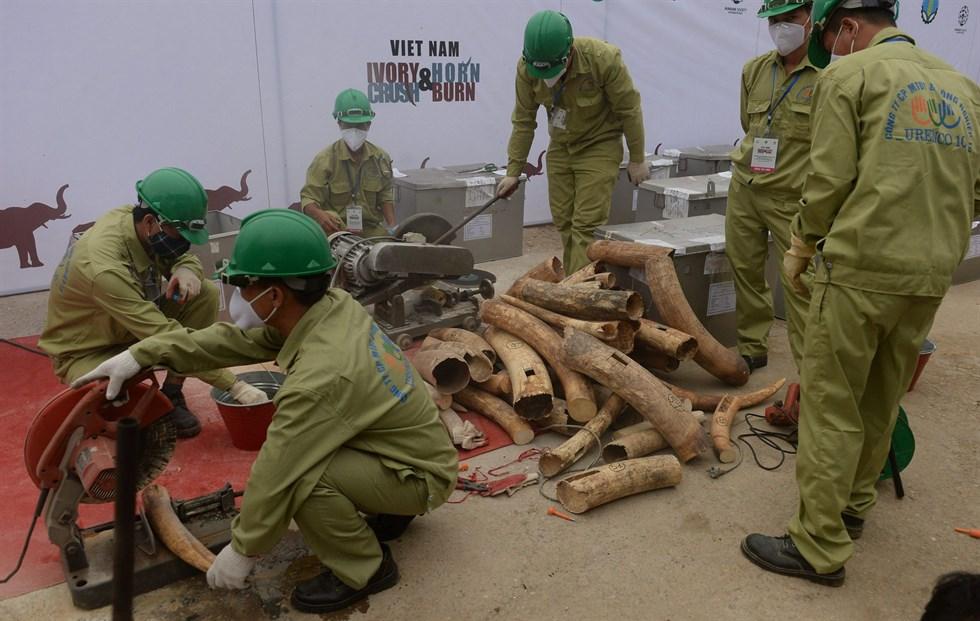 Kina förbjuder handel med elfenben - Österbottens Tidning