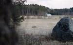 Martina Uthardt hann fotografera vargen när den fortsatte färden från Ribacksvägen i Övermalax.