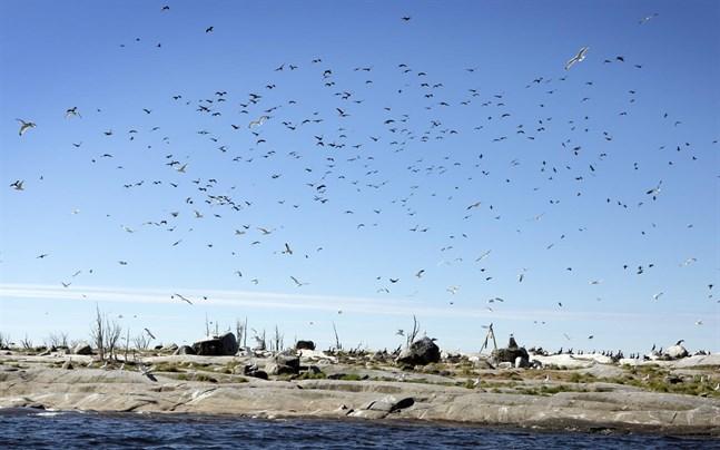 Baserat på resultaten i studien drar forskarna slutsatsen att de negativa effekterna på fiskbestånd av fåglar, främst skarv, och säl måste beaktas i fiskeriförvaltningen.