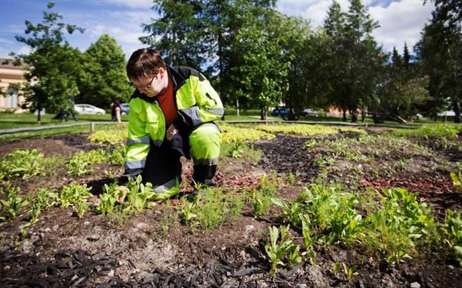 Heidi Hatanpää är blivande trädgårdsmästare och gör praktik på staden. Hon planerade trädgårdslandet tillsammans med Niina Kuusela.