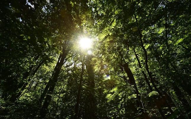 Att det är bra för människan att vistas i naturen är numera en självklarhet.