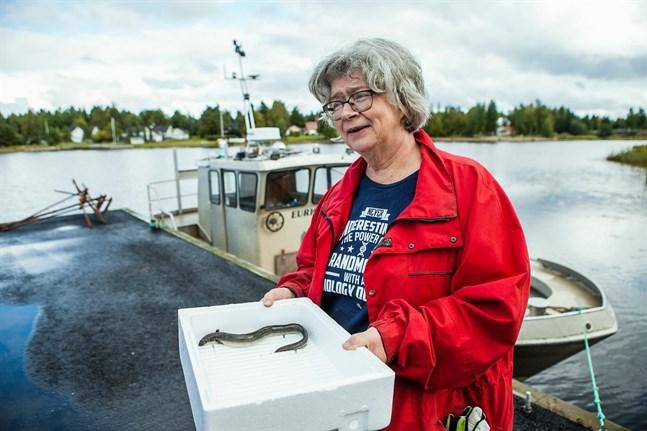 Birthe Wistbacka arbetar som verksamhetsledare för Norra Kust-Österbottens fiskeriområde.