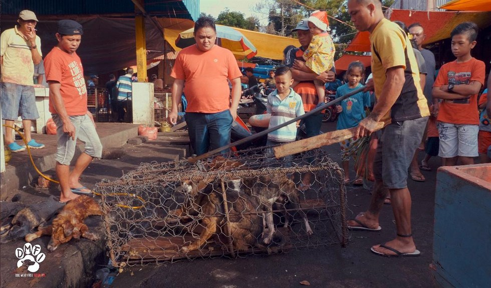 Varan dodade pojke i indonesien