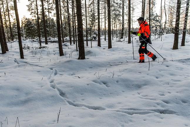 Johan Kniivilä spårade varg i Sorvist 2018. De senaste åren har vargobservationerna blivit färre.