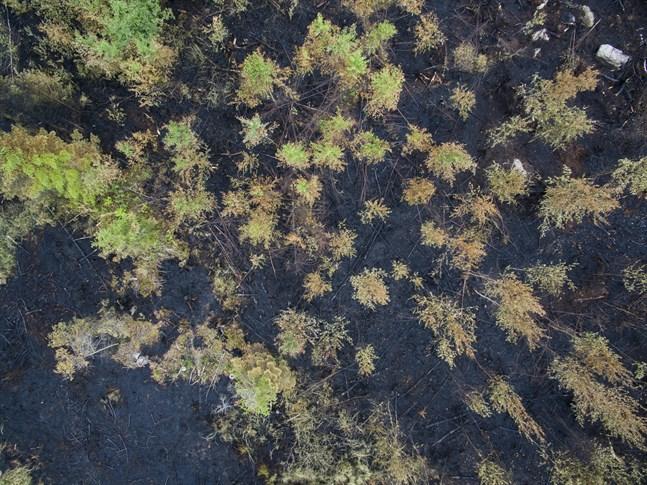 Arkivbild från skogsbranden i Molpe sommaren 2018.