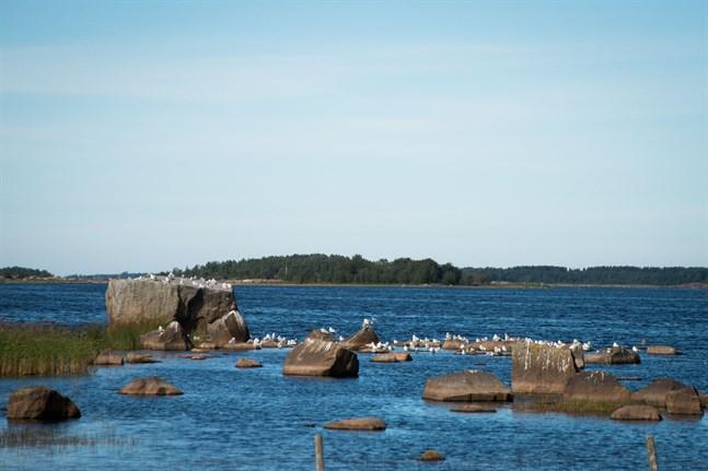 Tyvärr hotar en tilltänkt fiskodling strax utanför Ådön att ytterligare förvärra läget för Fäbodaviken och Ådöfjärden, skriver Anders Kronholm, ordförande för Vestersundsby delägarlag.