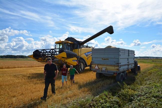 Leif Sand hade med sig sönerna Pontus och Dennis när han tröskade korn på sina egna åkrar i Övermark på onsdag eftermiddag.