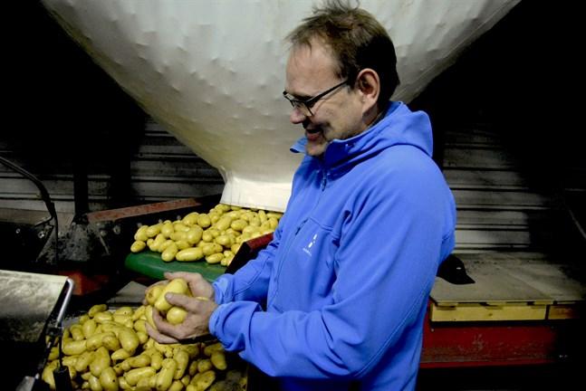 Kaj Hemberg befarar att en hel del fjolårspotatis kan finnas kvar i lager i höst eftersom förädlingen till storkök stannat av.