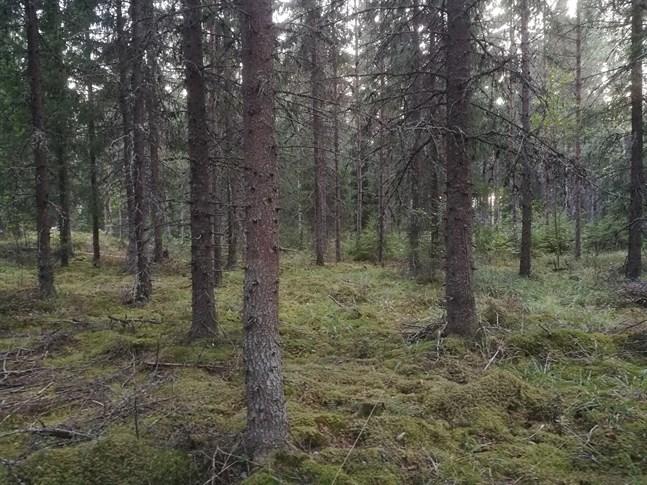 Eftersom en del av skogen inte räknades med i det historiska jämförelsetalet verkade kolsänkan ha ökat mer.