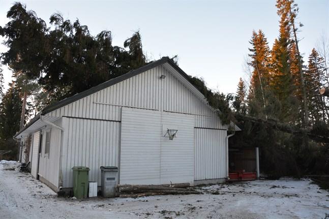 Träd lade sig rakt över uthustaket i Finby i Närpes. Det måste repareras.