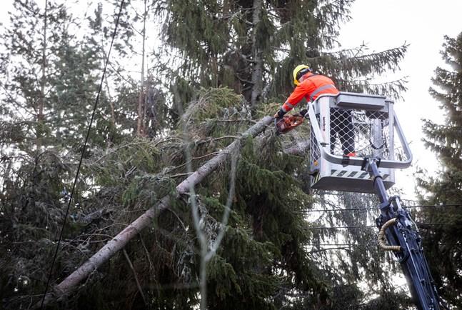 Flera träd har fallit på grund av stormen.