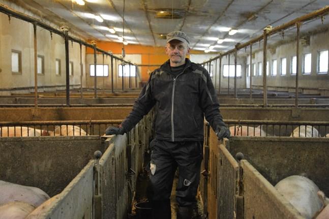 Det här är riktigt bra för oss köttproducenter, säger svinfarmaren Bengt Dahlin i Yttermark.