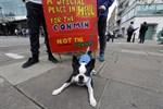 Människor och djur samlas inför demonstrationerna.