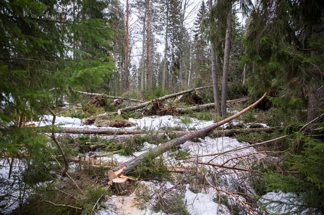 En lag som förbjuder en viss skogsvårdsmetod kan jämföras med ett förbud för en bilägare att att använda backen eller enstaka andra växlar på en bil, skriver Anders Portin.
