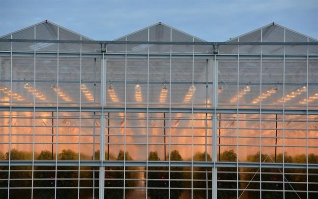 Det börjar handla om många hektar växthus som håller på eller planeras att byggas i Närpes som bäst.