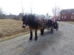 Påskhäst i Molpe.