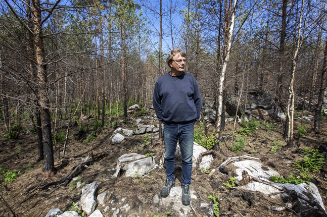 Johan Nynäs från Korsnäs blickar ut över sin skog som brann för ett år sedan. Han hade tur i oturen och inte mer än 3000 kvadratmeter av hans skog brann, vilket inte innebar någon enorm ekonomisk förlust för honom.
