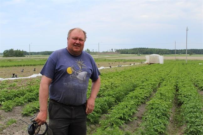 Kaj Berglund i Härkmeri, Kristinestad är en av de rätt få österbottniska potatisodlare som säljer nypotatis till handeln. Han konstaterar att det blev rekordtidig skörd det här året.