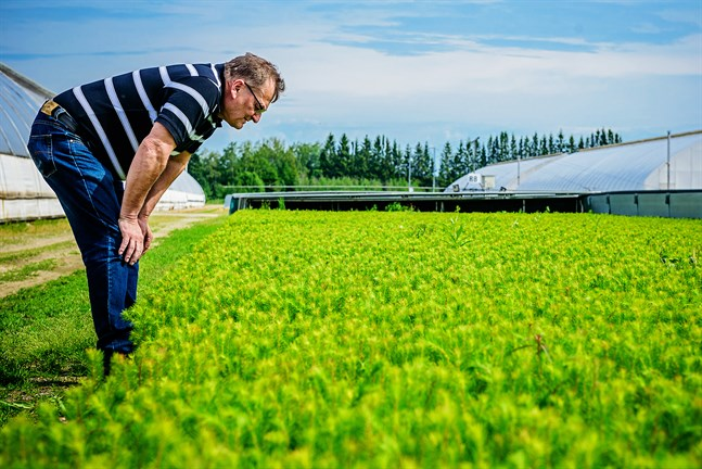 Mer vatten eller inte? Rainer Bodman har blick för de små plantornas behov.