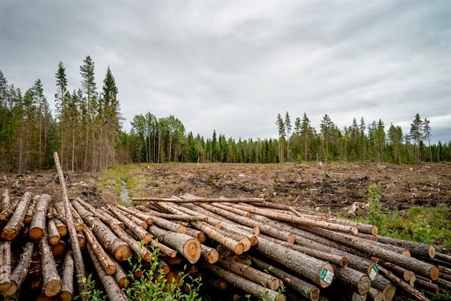 Sågstock är skogsägarnas huvudprodukt, påpekar Niclas Sjöskog, allt annat är sidoprodukter.