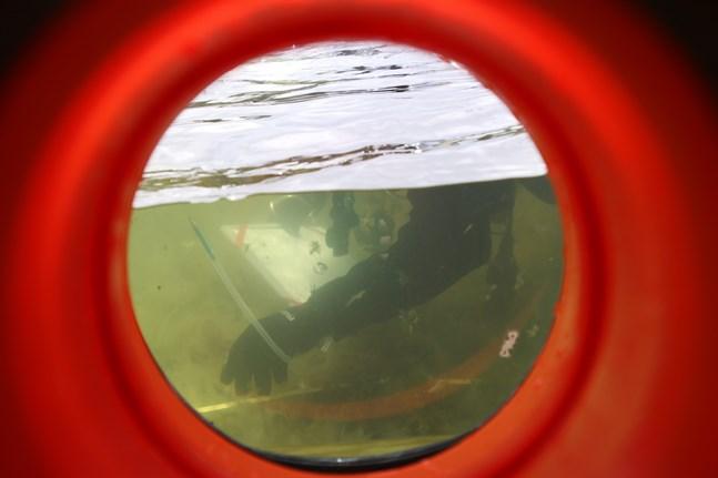Klimatförändringen + Bottenhavet = vad? Detta ska man ta reda på inom projektet ECOnnect. Bilden tagen genom en vattenkikare och i vattnet ses en Forststyrelsens dykare som undersöker sjöbotten.