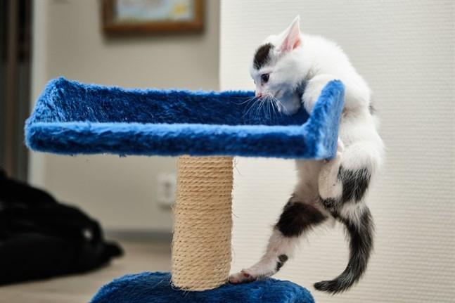 Arkivbild: Katt.