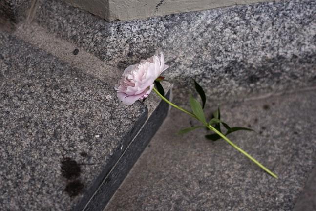 En blomma på trappen till Umeå stads kyrka i samband med en minneshögtid dagen efter den flygolycka där nio personer omkom.