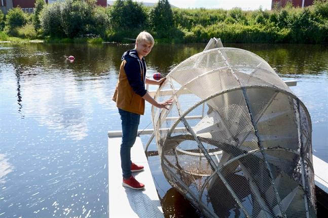 Smoltfällan, som egentligen är NTM-centralens, var i gång i Lappfjärds å och fångade in fisk mellan april och juni.