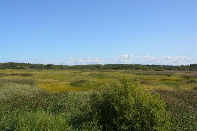 Att muddra Norrfjärden är ingen fungerande lösning, svarade Forststyrelsen när fiskekommittén ville restaurera.