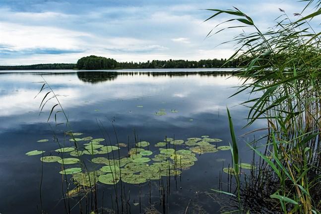 Problem med cyanobakterier vid Heimsjön kan tvinga simskolan att flytta.