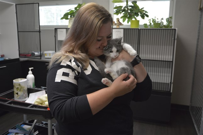 Från gatan in i värmen. Jenna Kotokorpi på Pohjanmaan eläinkeskus tar hand om hemlösa husdjur tills de hittar ett nytt hem. Katten Radamsa är en av åtta hittekatter på djurhemmet.