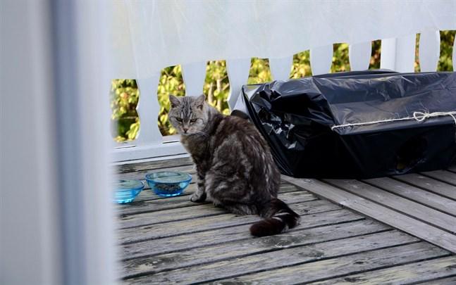 Just nu mår katten Kitty bra och hennes värden är stabilare.