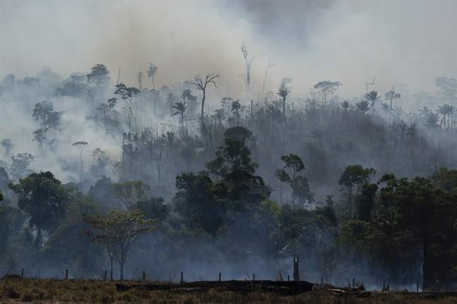 Ett eldningsförbud har införts i Brasilien. Arkivbild.