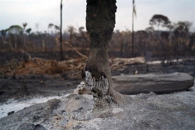 Bränderna i Amazonas upprör många. Men Brasilien säger sig inte ha resurser att få stopp på dem.