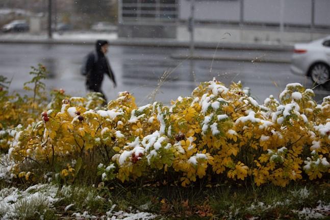 I södra och östra Finland kom det snö redan på fredagen. Den här bilden togs i Kuopio.