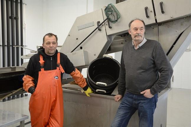 Bröderna Patrik och Hasse Sjökvist äger företaget Polarfilé. De köper och säljer fisk, men jobbar också med förädling. Bland annat testar de att torka nors.