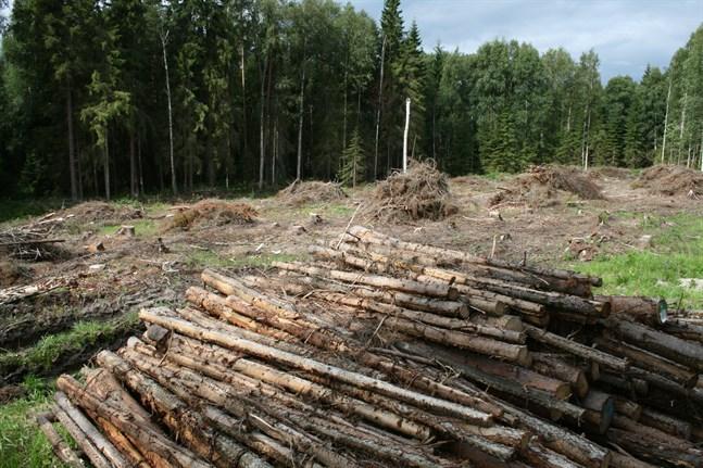 När skogsägaren får bestämma själv utrotas all växtlighet med grävmaskin, skogsharv eller högvändare, skriver Daniel Paro.