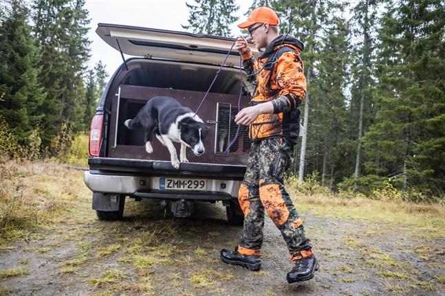 Jimmy Blomqvist var på onsdagen ute på jakt i närheten av Andra sjön och njuter nu av att våga jaga med hund som förut igen. Här hoppar 2,5-åriga Ztella ut ur bilen.