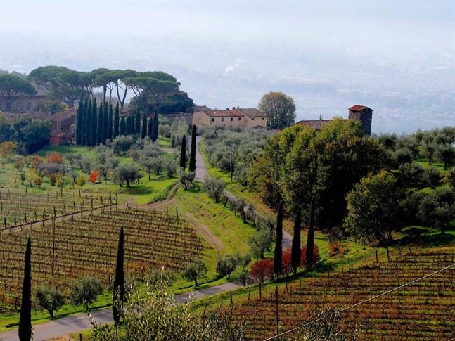 En krans av vingårdar omger Lucca. På hösten är en tur längs Strada del vino e olio ett skådespel av färger och smaker.