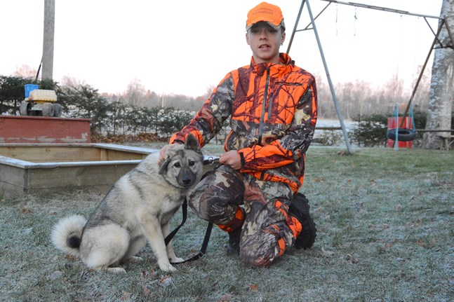 Sebastian Vägar betraktar gråhunden Sisuahon Akira som sin hund. Den har ännu inte blivit skolad till jakthund.