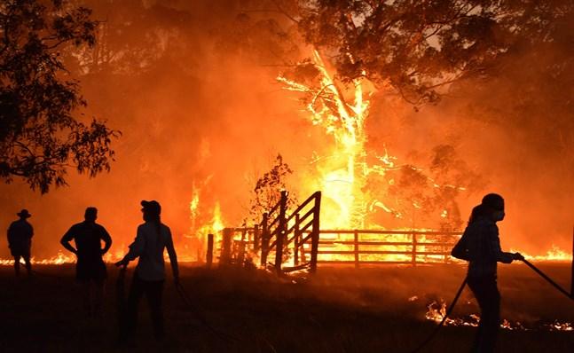 Ortsbor i närheten av staden Taree, söder om Coffs Harbour i Australien, kämpar mot elden.